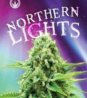 northern lights seeds