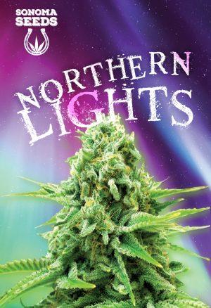 northern-lights-seeds