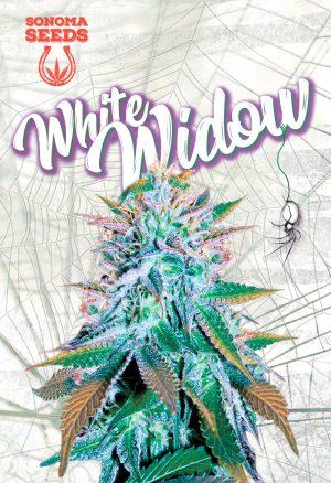 sonoma white widow seeds