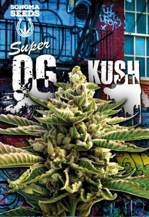 super-og-kush-seeds