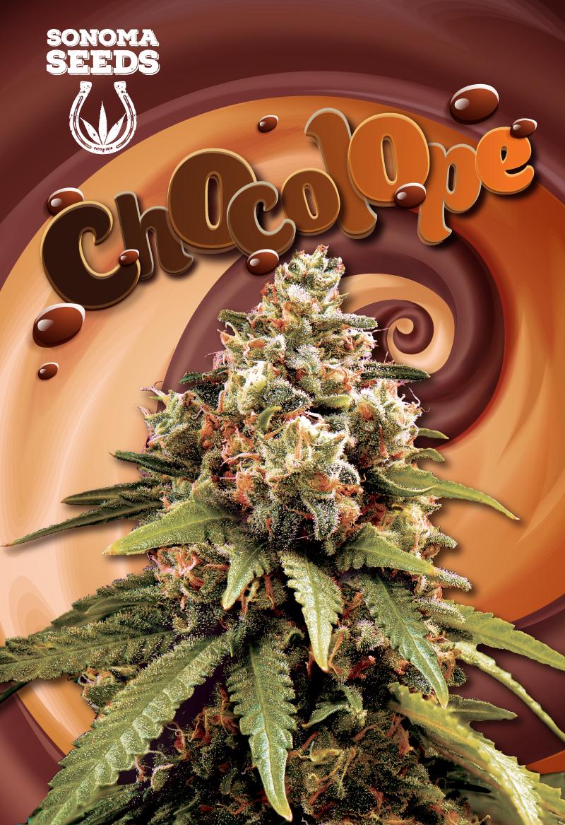 chocolope seeds