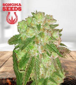 Cherry Lemonade Feminized Marijuana Seeds