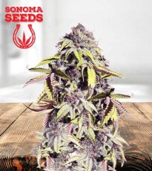 Crown Royale Feminized Marijuana Seeds