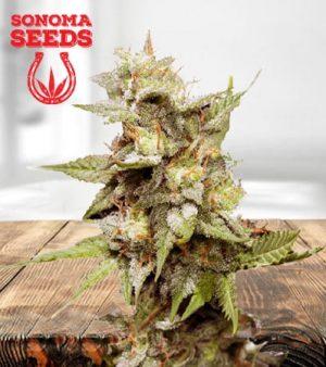 Hawaiian Skunk Feminized Marijuana Seeds