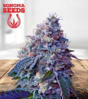 Hollywood OG Feminized Marijuana Seeds