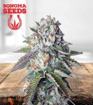 Kosher Kush Feminized Marijuana Seeds