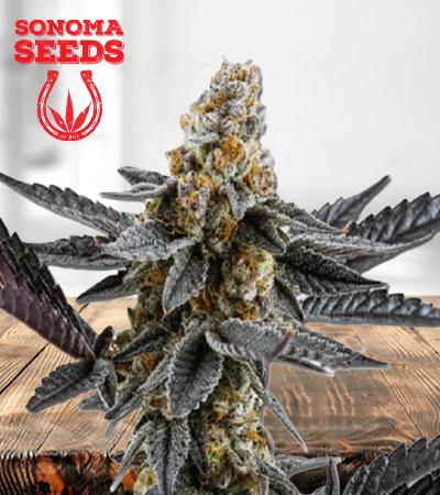 Meat Breath Autoflower Marijuana Seeds