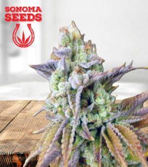 Mothers Milk Feminized Marijuana Seeds