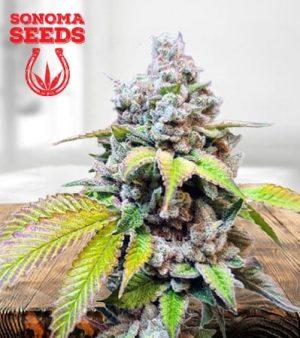 Skunk Berry Feminized Marijuana Seeds