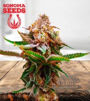 Strawberry Kush Autoflower Marijuana Seeds