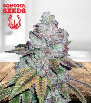 Tahoe OG Feminized Marijuana Seeds