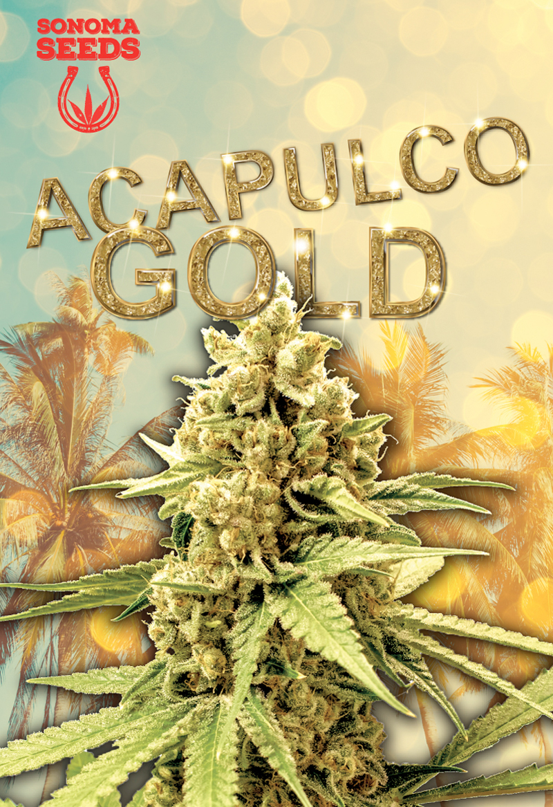 Acapulco Gold Seeds