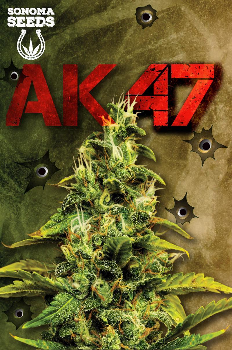AK47 Hybrid Marijuana Seeds