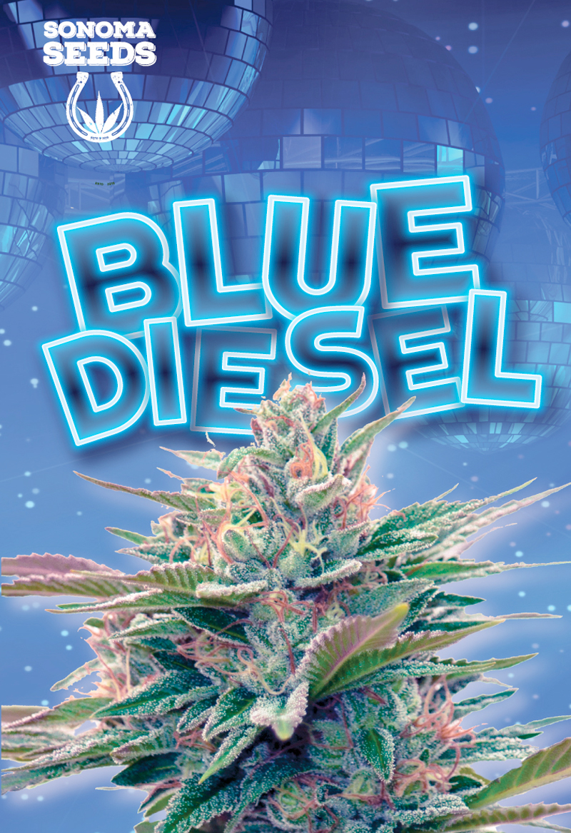 Blue Diesel Autoflower Feminized Marijuana Seeds