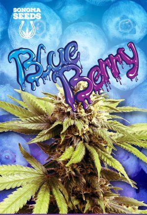 blueberry-seeds