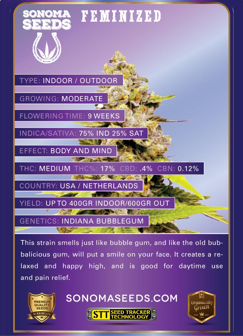 Bubblegum Hybrid Marijuana Seeds
