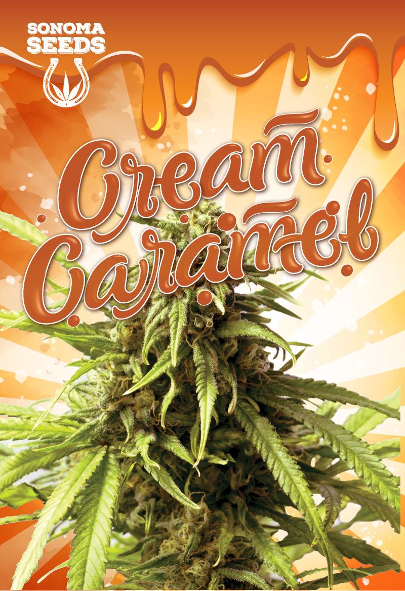 Cream Caramel Seeds
