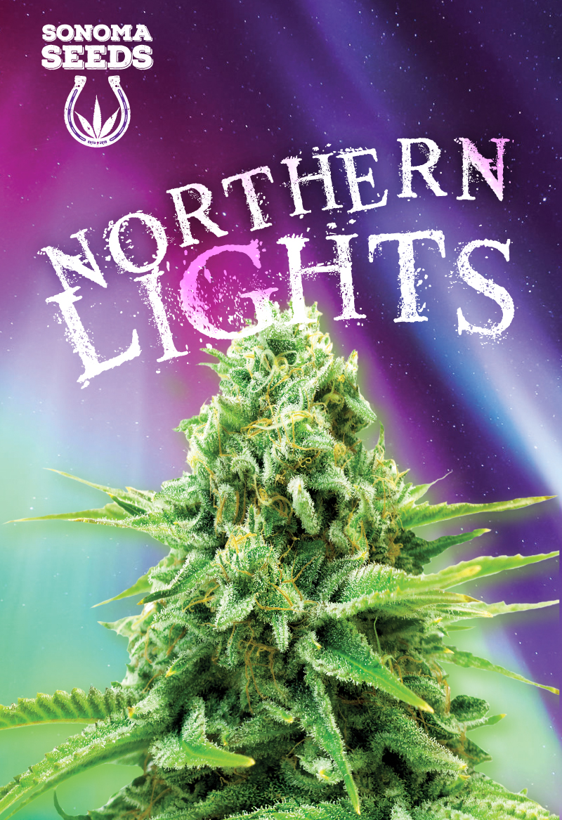 Northern Lights Indica Feminized Marijuana Seeds