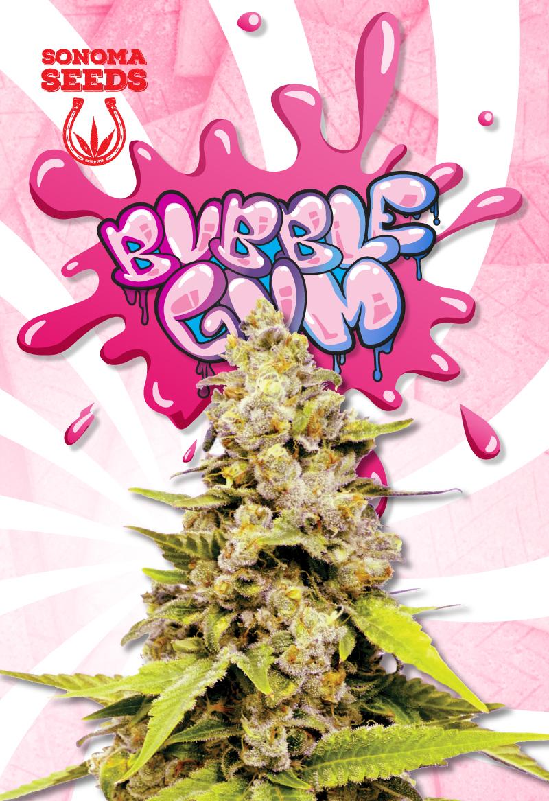 Bubblegum Hybrid Feminized Marijuana Seeds