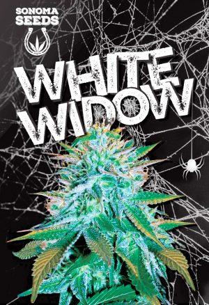sonoma-white-widow-autoflower