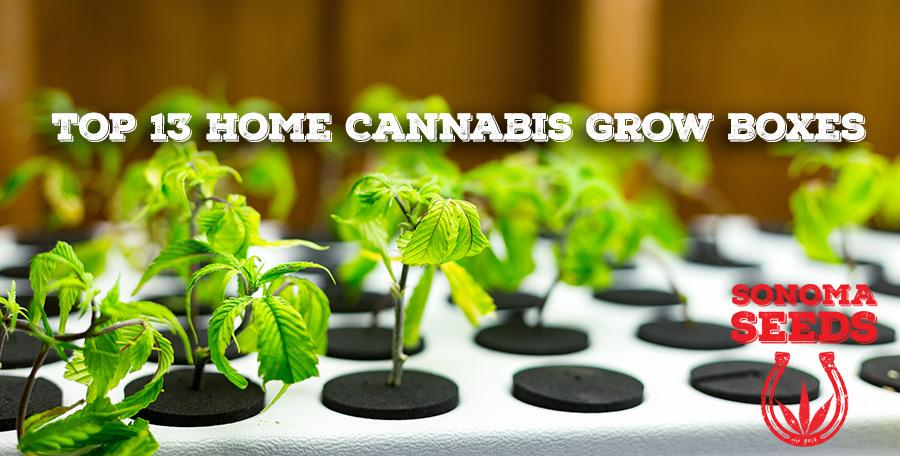 home cannabis grow boxes