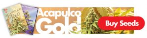 acapulco gold cannabis seeds